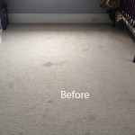 Bedroom-Wall-to-Wall-Carpet-Cleaning-Berkeley-A
