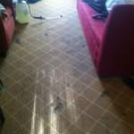 Berkeley-Carpet-Clean-before