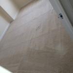 Berkeley-Carpet-Clean-room