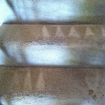 Berkeley-Stairs-Carpet-Cleaning