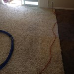 Berkeley-Traffic-Area-carpet-cleaners