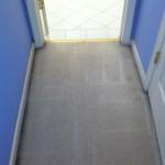 Berkeley-Vomit-after-carpet
