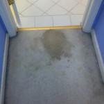 Berkeley-Vomit-before-carpet