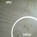 Berkeley-Wine-Stain-Carpet-Cleaning