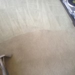 Carpet-Cleaning-Berkeley