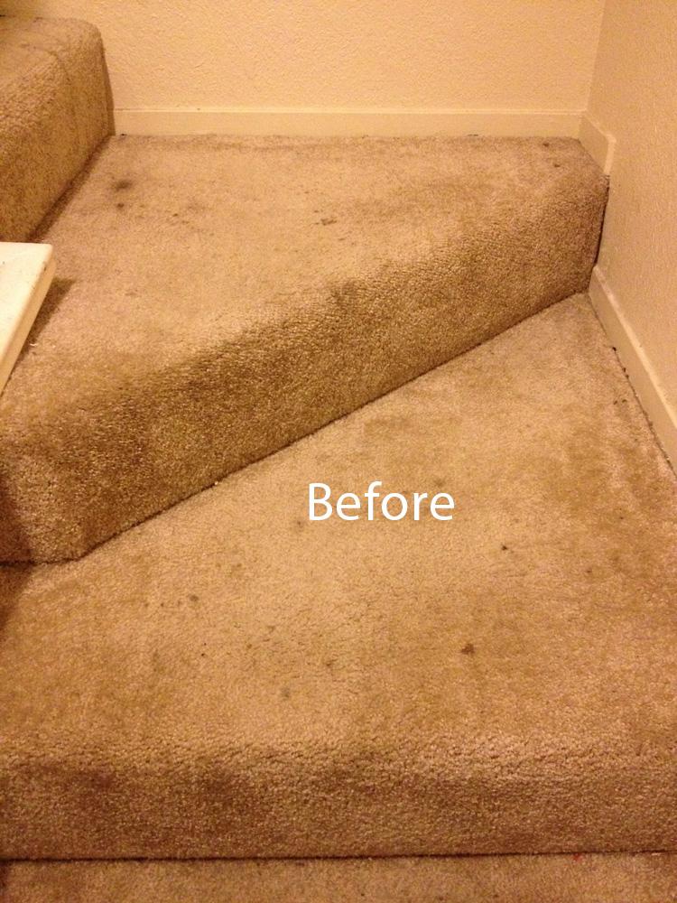 Carpet Cleaning : Carpet Cleaning Berkeley : (510) 210-1310